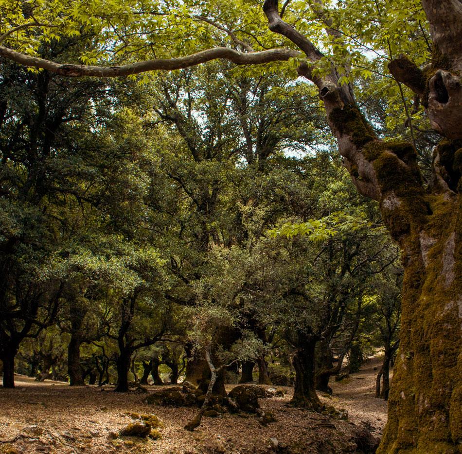 Δάσος Ρούβα
