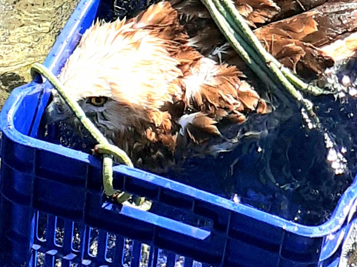 Διάσωση πτηνού