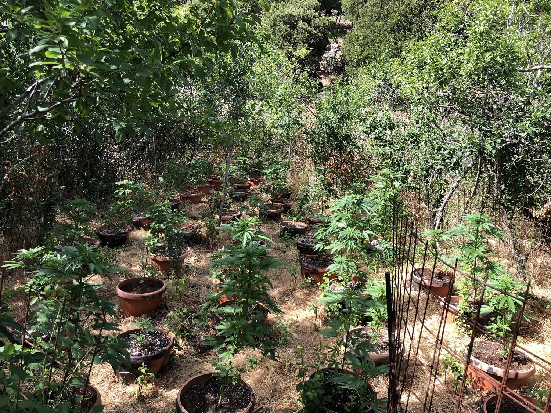 Ρέθυμνο Φυτεία