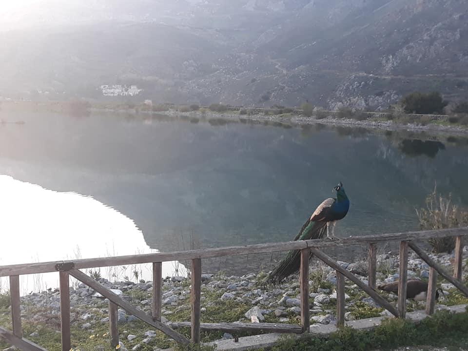 Λίμνη Διγενή Γέργερη