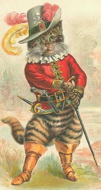 Un gatto Shuid Perù