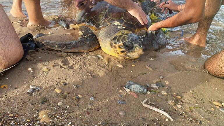 Οι εθελοντές έσωσαν τη θαλάσσια χελώνα στη Σητεία